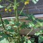 🥒きずな菜園🍅