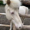 智光山公園の動物園に行ってきました✨